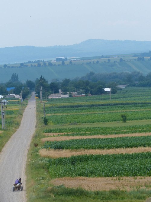 Die Wege in Rumänien sind selten gerade. Den Weg nach Verseni werde ich immer wieder finden. - Foto: Anne Burgmer.